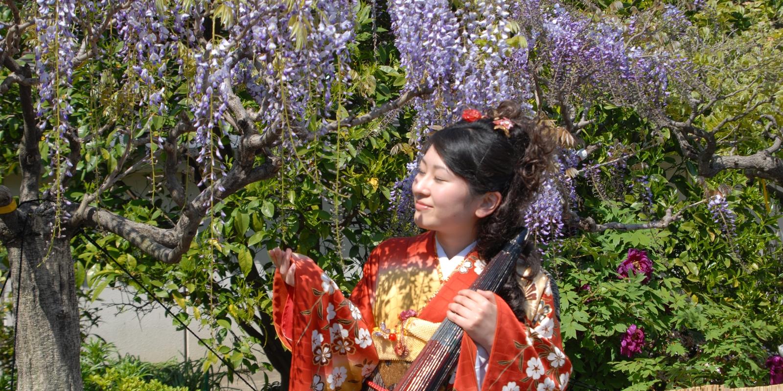 石井の地福寺の藤の花
